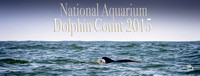 Dolphin Count 2015