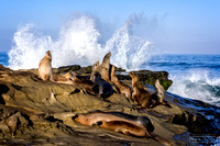 Sea Lions at sunrise