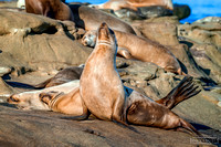 Sea Lions Relaxing in the Sun