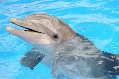 dolphin death1