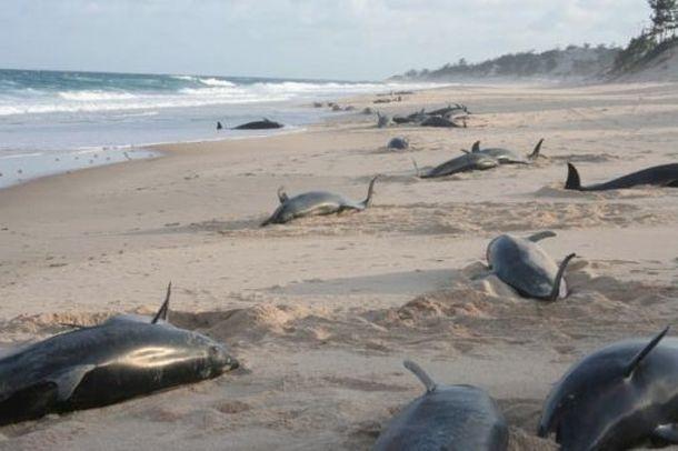 dolphin death2